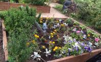 Flowers Plants Plant Allotments allotment community garden