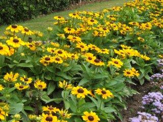 Whitwick park - flowers