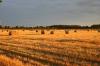 Articles 1234 Idg5 JPf25 G UD Harvest Field